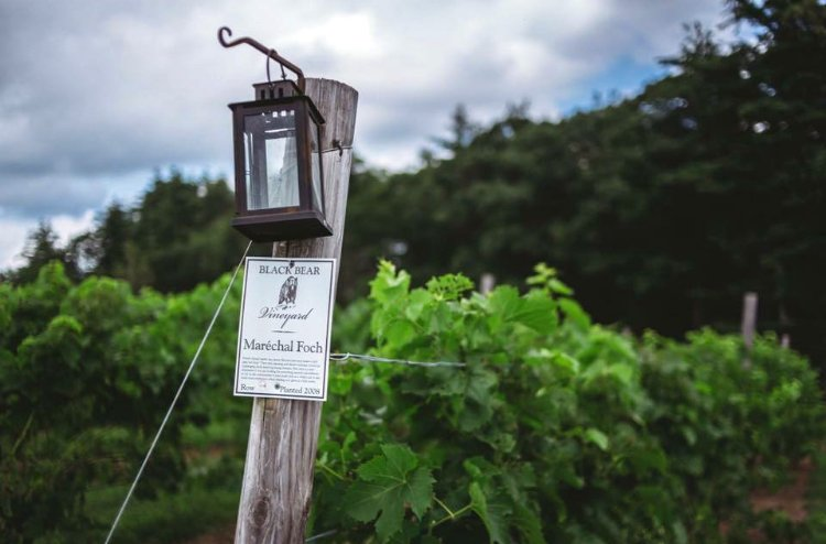 Black Bear Vineyard Wine Sign on Post