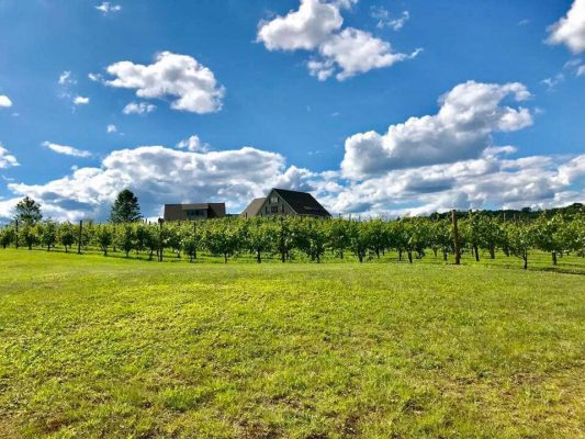 Black Bear Vineyard & Winery Photo