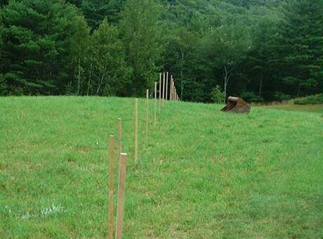 Posts at Black Bear Vineyard
